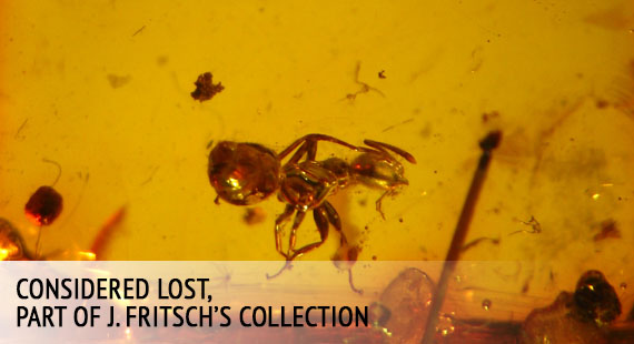 Considered lost, part of J. Fritsch's collection of amber inclusions displayed at the Museum of the World Ocean